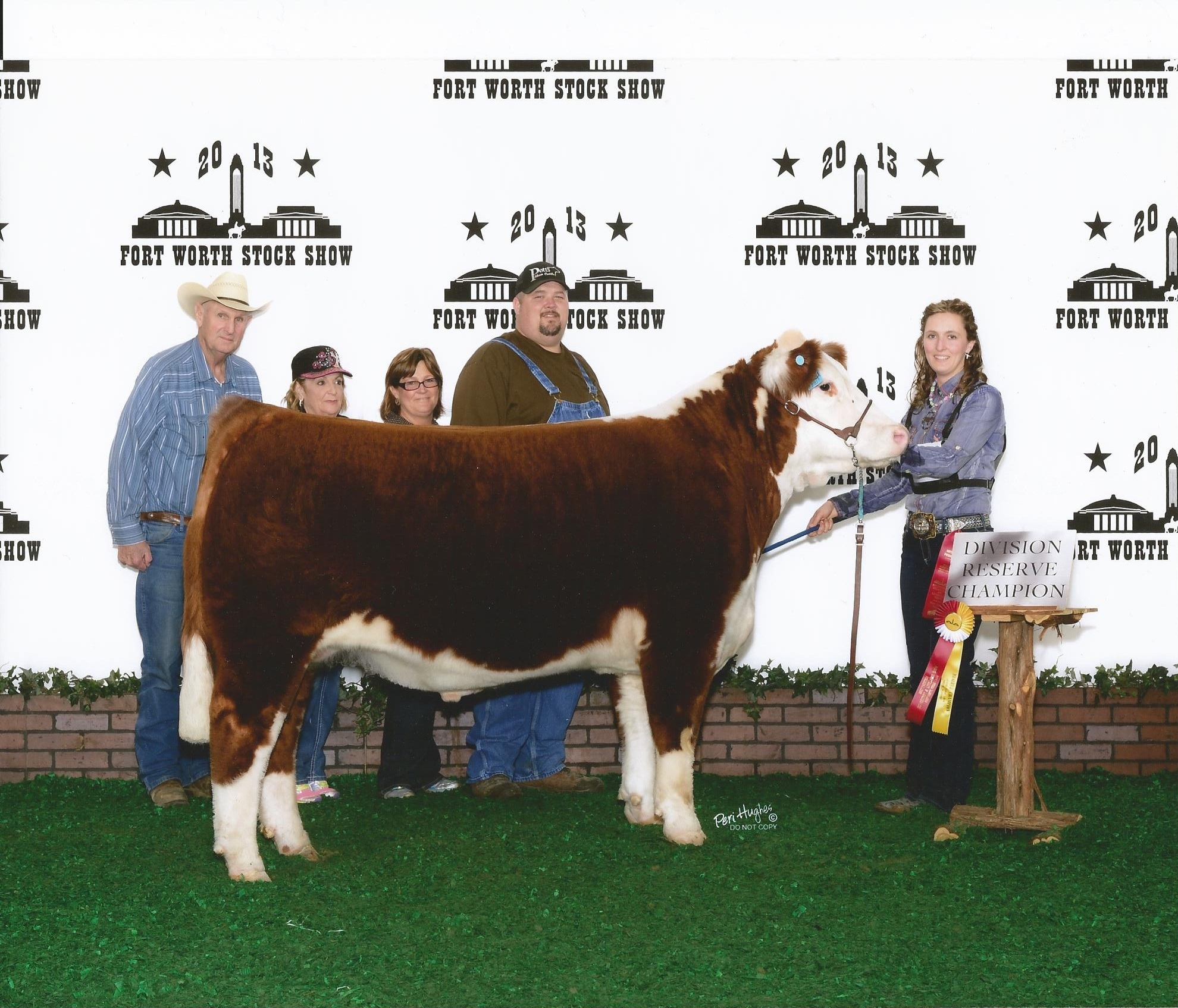 Reserve Champion Polled Hereford